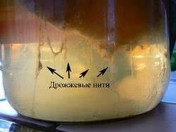 http://combucha.ru/images/stories/Foto/yeast-filament-Kombucha.jpg