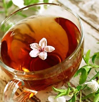 Напиток чайного гриба наверное одно из самых эффективных средств в борьбе с заболеваниями желудочно-кишечного тракта.